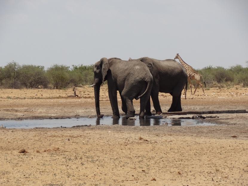 Namibian-kiertomatka: Afrikan eläimiä